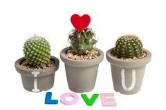 Heart-shaped cactus isolated on white background Stock Photos