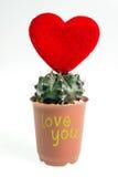 Heart-shaped cactus isolated on white background Royalty Free Stock Photo