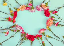 Heart shaped carnation flowers frame royalty free stock photography