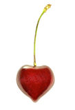 Heart-Shaped Cherry Stock Photo