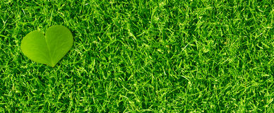 Green Eco Friendly Banner background Royalty Free Stock Photos