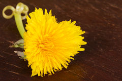 Heart shaped dandelion Royalty Free Stock Image