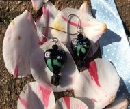 Heart shaped earrings on petals. Heart shaped black glass earrings on petals Stock Image