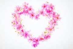 Heart-shaped floral background: vivid pink apple blossom. Copy s stock images