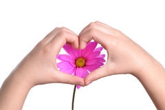 Heart Shaped Flower Royalty Free Stock Photography