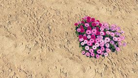 Heart-shaped flower-garden among a desert 2 Stock Images