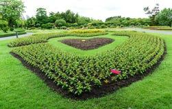 Heart-shaped flower garden Stock Image