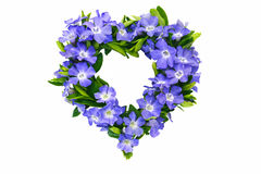 Heart shaped from flowering evergreen Royalty Free Stock Photography