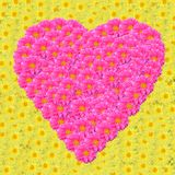 Heart-shaped flowers. Stock Photography