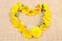 Heart shaped flowers of dandelion on jute canvas Royalty Free Stock Photo