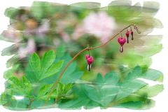 Heart shaped blossoms hanging from the branch of a bush - Garden flowers in the summer, watercolor brush framing royalty free stock photos