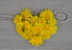 Heart shaped flowers Royalty Free Stock Image