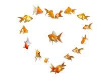 Heart Shaped Frame Background - Wedding. Goldfishes Set (Heart Shaped Frame Background) - Wedding - Many beautiful goldfishes isolated on white background (can royalty free stock image