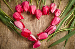 The heart-shaped frame of fresh tulips Royalty Free Stock Photography