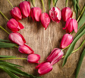 The heart-shaped frame of fresh tulips Royalty Free Stock Images