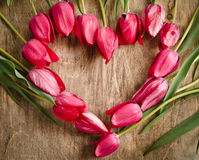 Heart-shaped frame of fresh tulips Stock Photography