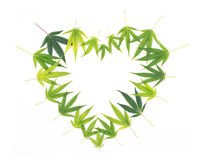 Heart shaped frame made from green cannabis leaves isolated on w Royalty Free Stock Photo