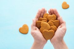 Heart shaped gingerbread cookies in hands. Valentines Day. royalty free stock photos