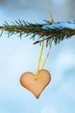 Heart-shaped gingerbread on spruce Royalty Free Stock Photos