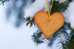 Heart-shaped gingerbread on spruce Stock Image