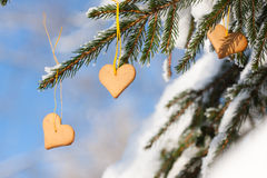 Heart-shaped gingerbread on spruce Stock Photos