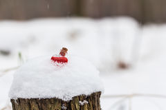 Heart-shaped glass vial filled with love potion in winter forest. Heart-shaped glass vial filled with red love potion on snow-covered stump somewhere in forest Stock Photo