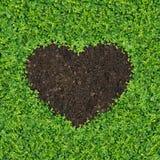 Heart-shaped grass. Small green plants, soil, fertilizer is a heart shape royalty free stock photos