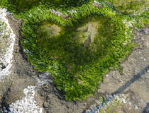 Heart shaped  of green algae on a beach Royalty Free Stock Photography