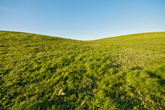 Heart Shaped Green Landscape. Heart Shaped Green Grass Landscape and blue sky at Berkeley Marina in the East Bay Royalty Free Stock Photography