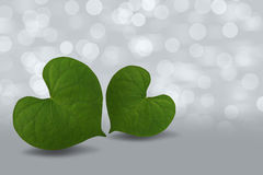 Heart shaped green leaf on bokeh background. Beautiful Heart shaped green leaf on bokeh background Stock Photos