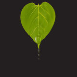 Heart shaped green leaf with water drops on black background, vector illustration Stock Image