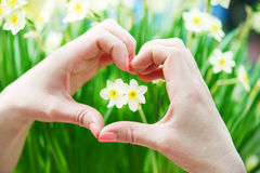 Heart shaped hand around flower Stock Photo