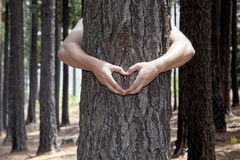 Heart shaped hands. Man hugging a tree and making a heart shape with his hands Stock Images