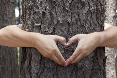 Heart shaped hands. Man hugging a tree and making a heart shape with his hands Royalty Free Stock Image