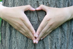 Heart shaped hands Stock Photo