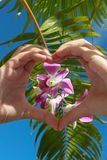 Heart shaped hands with orchid on sky background. With a palm leaf Royalty Free Stock Images