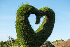 Heart shaped hedge Royalty Free Stock Photography