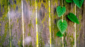 Heart shaped green leaves and rustic wood fence Royalty Free Stock Image