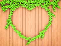 Heart shaped ivy on wood  wall Stock Images