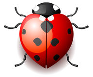 Heart shaped ladybug Royalty Free Stock Photos