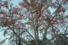 Heart-Shaped Laternen in einem Baum Stockfotografie