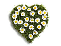 Heart shaped lawn with daisies Stock Photography