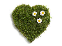 Heart shaped lawn sod with three daisies Royalty Free Stock Photos