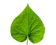 Heart shaped leaf Royalty Free Stock Images