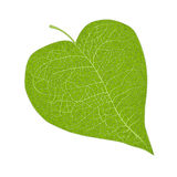Heart shaped leaf Stock Images