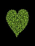 Heart shaped leaf on black Stock Image