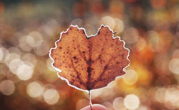 Heart-shaped leaf with bokeh background. Love symbol. Frozen heart-shaped leaf with bokeh background. The boken is created by reflections on the grass, droplets Royalty Free Stock Photography
