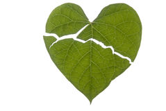 Heart Shaped Leaf Broken. A broken heart shaped leaf Royalty Free Stock Image
