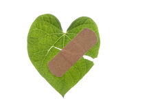 Heart Shaped Leaf Broken with Bandaid Royalty Free Stock Photography