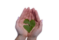 Heart Shaped Leaf Broken in Girls Hands Royalty Free Stock Photography